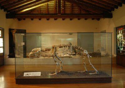 Museo Civico – La Terra e l'Uomo